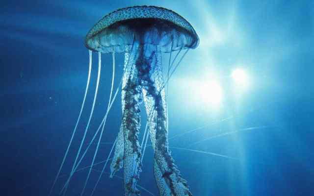 Mangiamoci... le meduse!