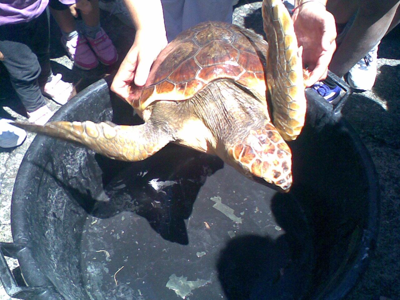 Salina, tartarughe in mare un anno dopo