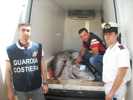 Sequestrati 700 kg di tonno rosso