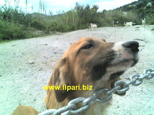 40 tra cani e gatti abbandonati a Capo Rosso