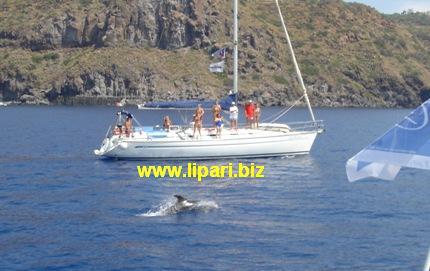 Guarda i delfini delle Eolie