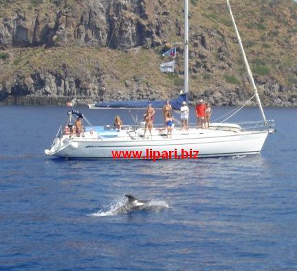 Alla scoperta del magnifico mondo dei delfini