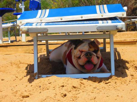 A Lipari stop ai cani in spiaggia...