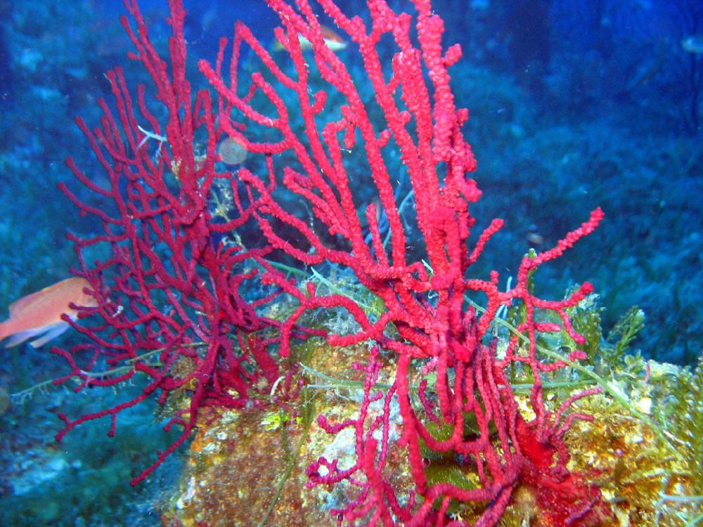 Nei fondali di Vulcano: immersione a Capo Grosso