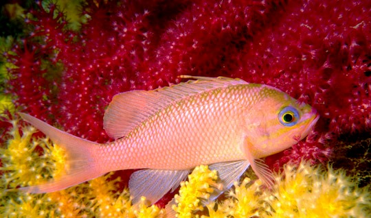 Un pesce per … Il 1° d'Aprile!   2° Parte