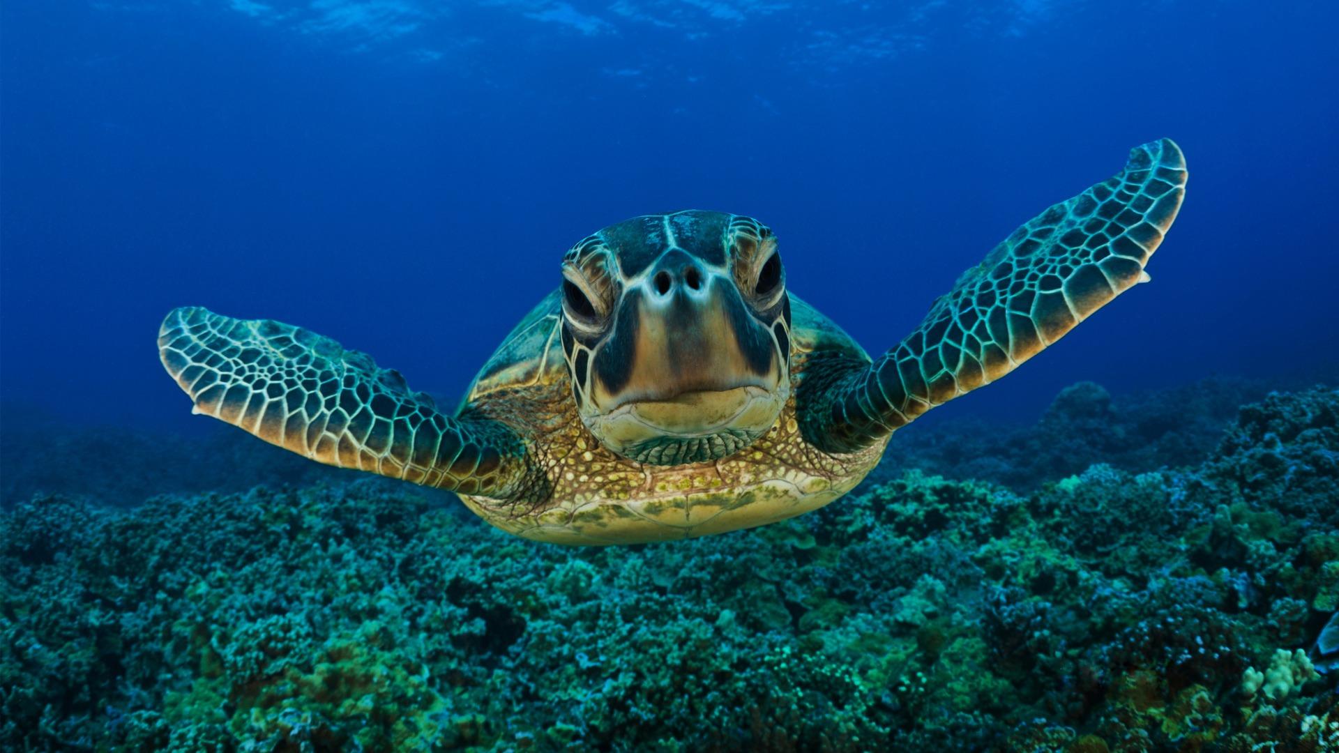 Se salviamo le tartarughe, salveremo il mondo…1°Parte