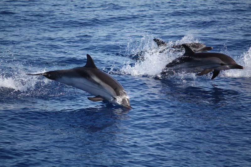 Lino, Filippa, Giacomino e gli altri: gli amici delfini di Filicudi