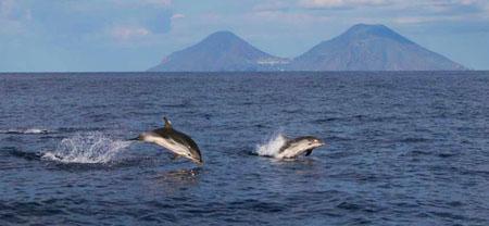 Un diverso tipo di turismo: delfini e balene nel mare delle Eolie