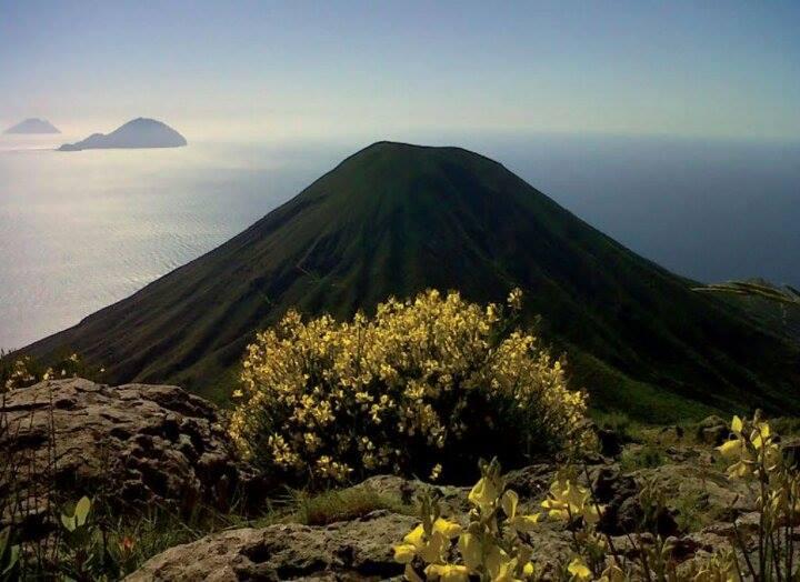 Flora Eoliana: cosa madre natura ci ha regalato