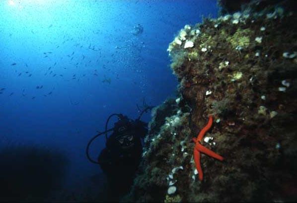 Itinerari subacquei a Filicudi