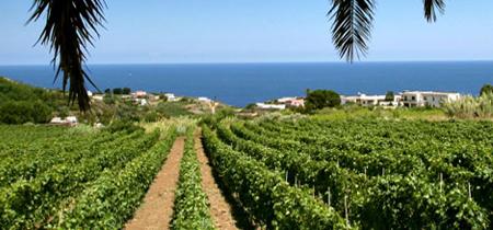 Alla scoperta dei vitigni delle Isole Eolie: la Malvasia     1°Parte