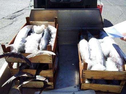 110 kg di pesce sequestrati e distrutti
